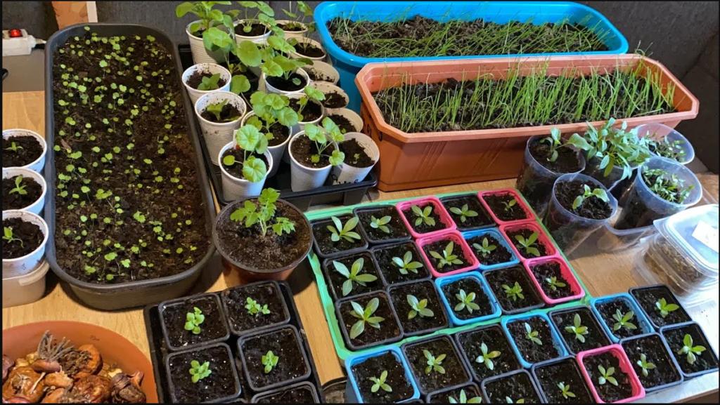 Выращивание рассады овощных культур в домашних условиях.