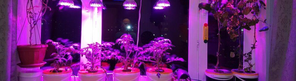 Дополнительное освещение рассады томатов светодиодными фитолампами
